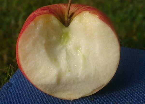 Fitnessfood Apfel