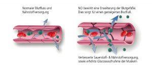 Skizze Blutfluss normal und mit NO