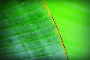 chlorella erfahrung entgiftung chlorophyll