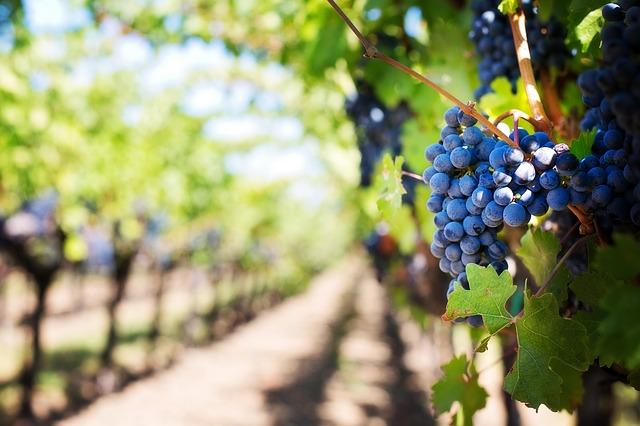 Weintrauben Testosteron steigern
