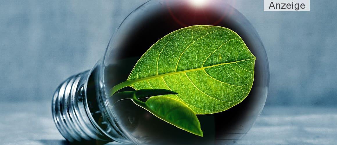 Mit flüssigem Chlorophyll abnehmen