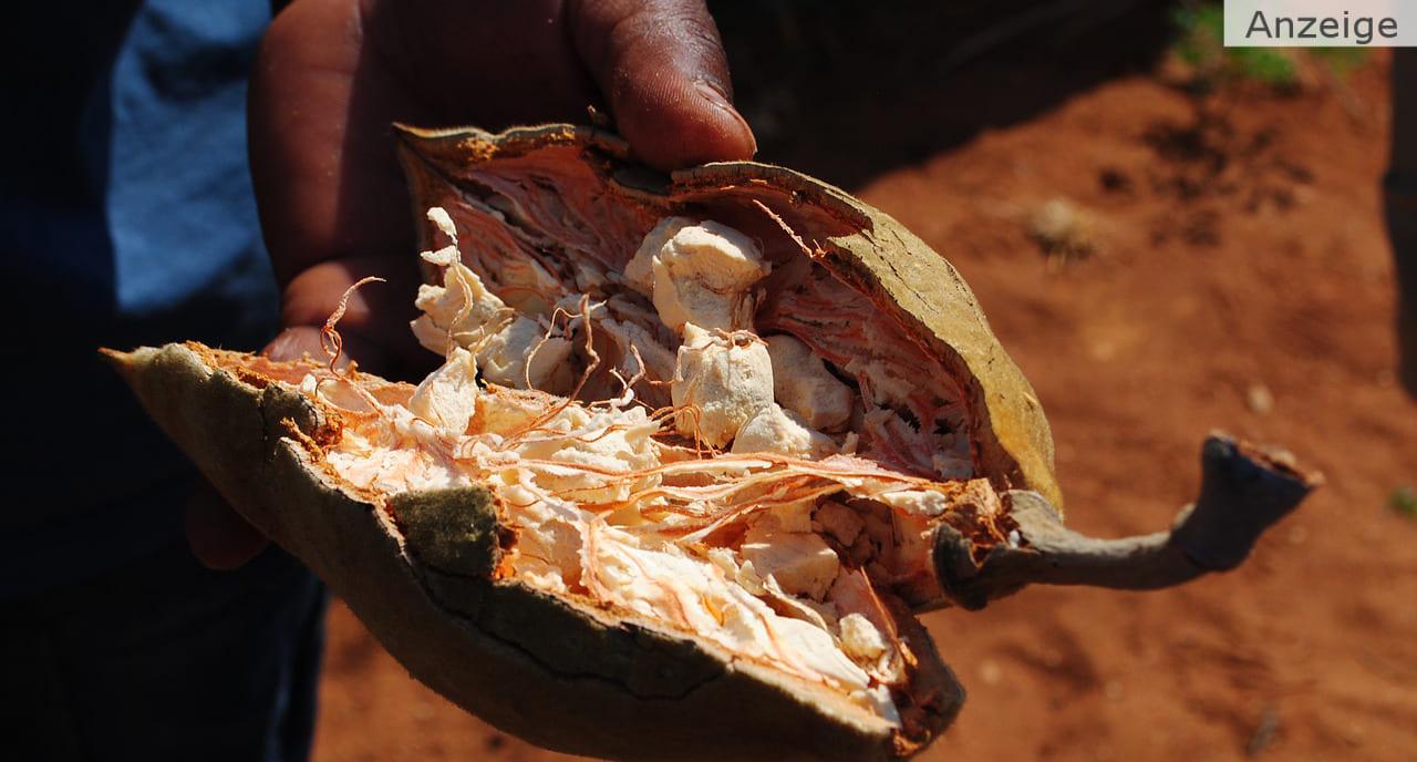 Baobab Superfood & Baum des Lebens
