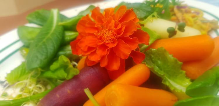 Hippocrates-Health-Institut-Wildkräuter-Salat