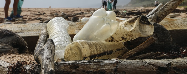 local-water-erfahrung-plastikflasche