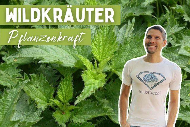 Wildkräuter Titelbild Pflanzenkraft