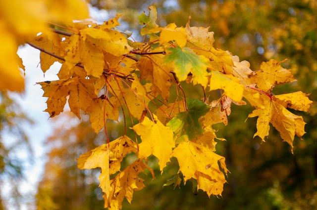 Ausbleiben der Periode_Amenorrhoe_Herbst