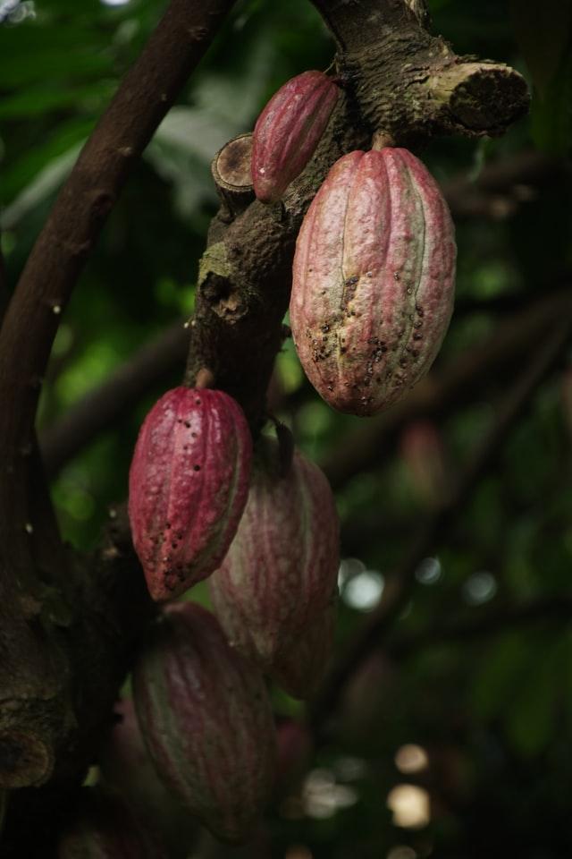 kakao bohne freeletics protein
