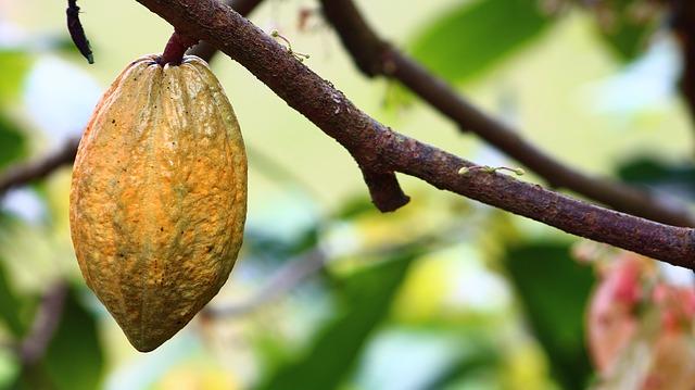 Kakao gesund