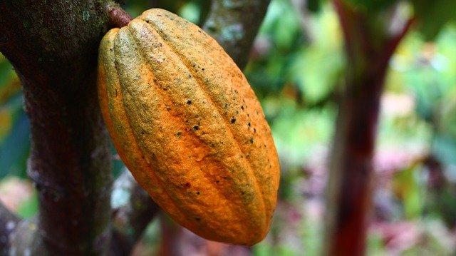 kakao gesund lala