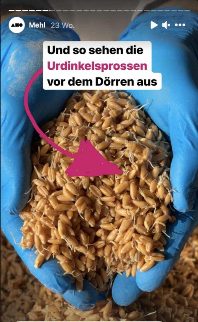 AHO.BIO Sprossenmehl gekeimtes Mehl